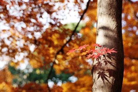 春夏秋冬それぞれの季節に訪れてみたい_a0259130_18021068.jpg