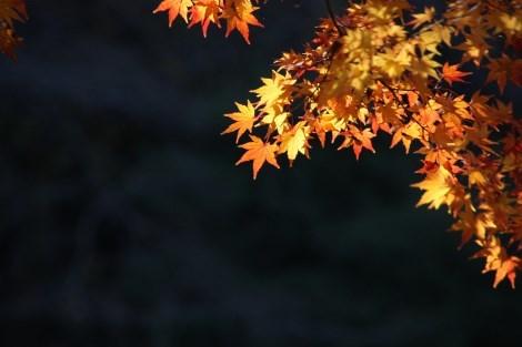 春夏秋冬それぞれの季節に訪れてみたい_a0259130_18162112.jpg