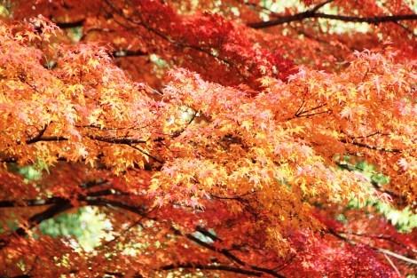 春夏秋冬それぞれの季節に訪れてみたい_a0259130_18203052.jpg