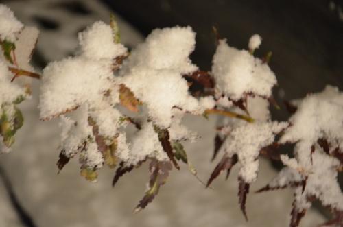 冬景色!?_b0207642_13384255.jpg