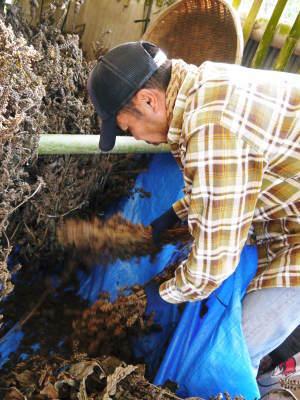 無農薬・無化学肥料で育てる「菊池水源産エゴマ」 平成29年度のエゴマの収穫や脱穀作業と第3回エゴマ部会_a0254656_11290933.jpg