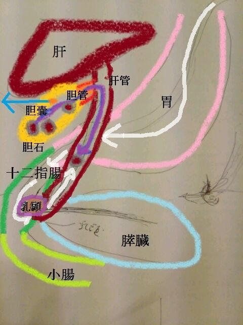 入院・手術_b0255266_2414874.jpg