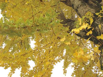 実りの秋***_e0290872_23080933.jpg