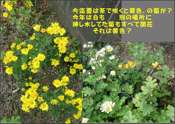f0003174_10504232.jpg
