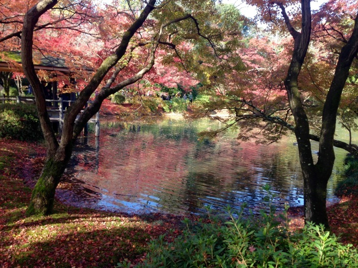 秋の植物園と陶板名画の庭   京都_c0100195_09291508.jpg