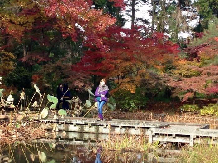 秋の植物園と陶板名画の庭   京都_c0100195_09352218.jpg