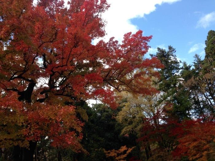 秋の植物園と陶板名画の庭   京都_c0100195_09381843.jpg