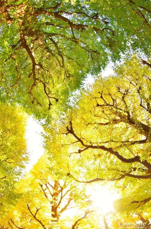 秋の東京写んぽ_f0321522_09151520.jpg