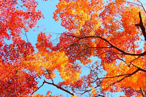 京都パンパン赤線時代 四十九_f0347663_16182993.jpg