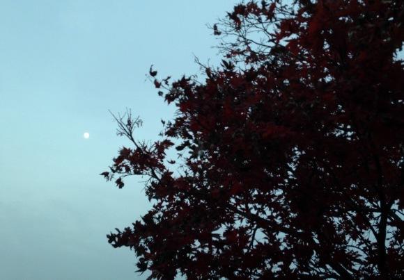 満月に向けての収穫***_e0290872_18251741.jpg
