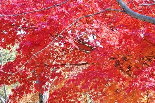 鶴見緑地の紅葉_b0329186_09180797.jpg