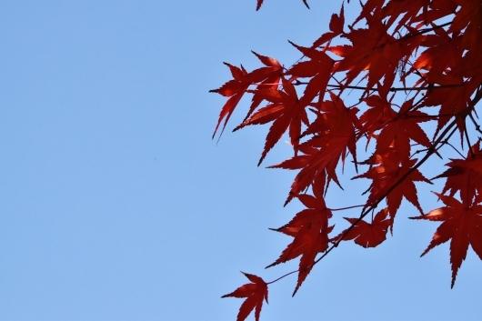 鶴見緑地の紅葉_b0329186_09220424.jpg