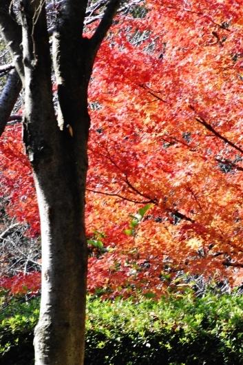 鶴見緑地の紅葉_b0329186_09231811.jpg