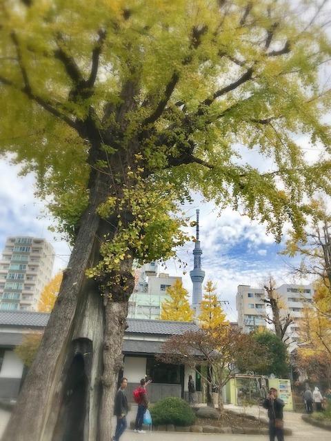 東京お出かけ感動 最終編_c0165589_15351550.jpg