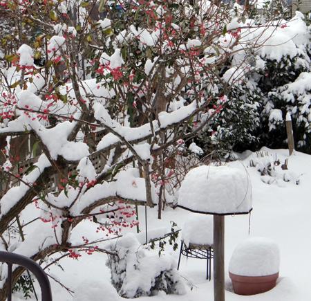 雀と11月の大雪と・・・♪_a0136293_16094219.jpg