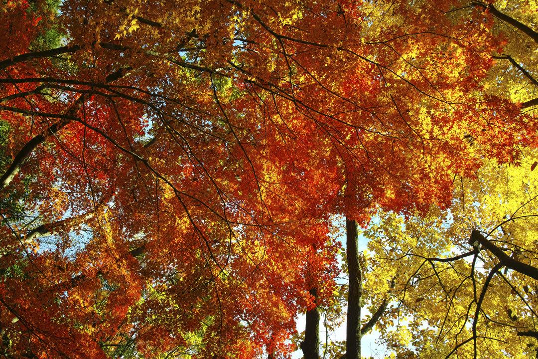 ②21世紀の森と広場、紅葉狩り _c0223825_01460203.jpg