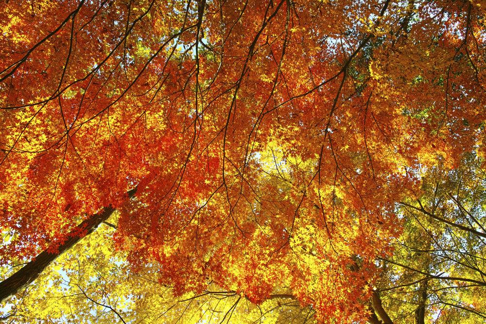②21世紀の森と広場、紅葉狩り _c0223825_01470518.jpg