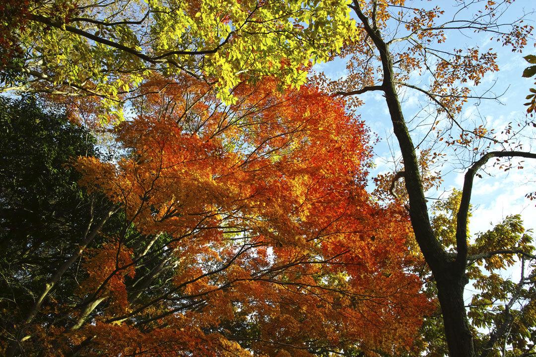 ②21世紀の森と広場、紅葉狩り _c0223825_01481815.jpg