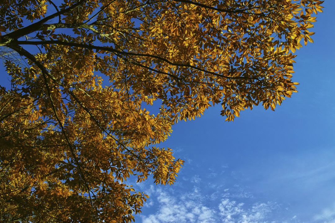 ②21世紀の森と広場、紅葉狩り _c0223825_01492809.jpg