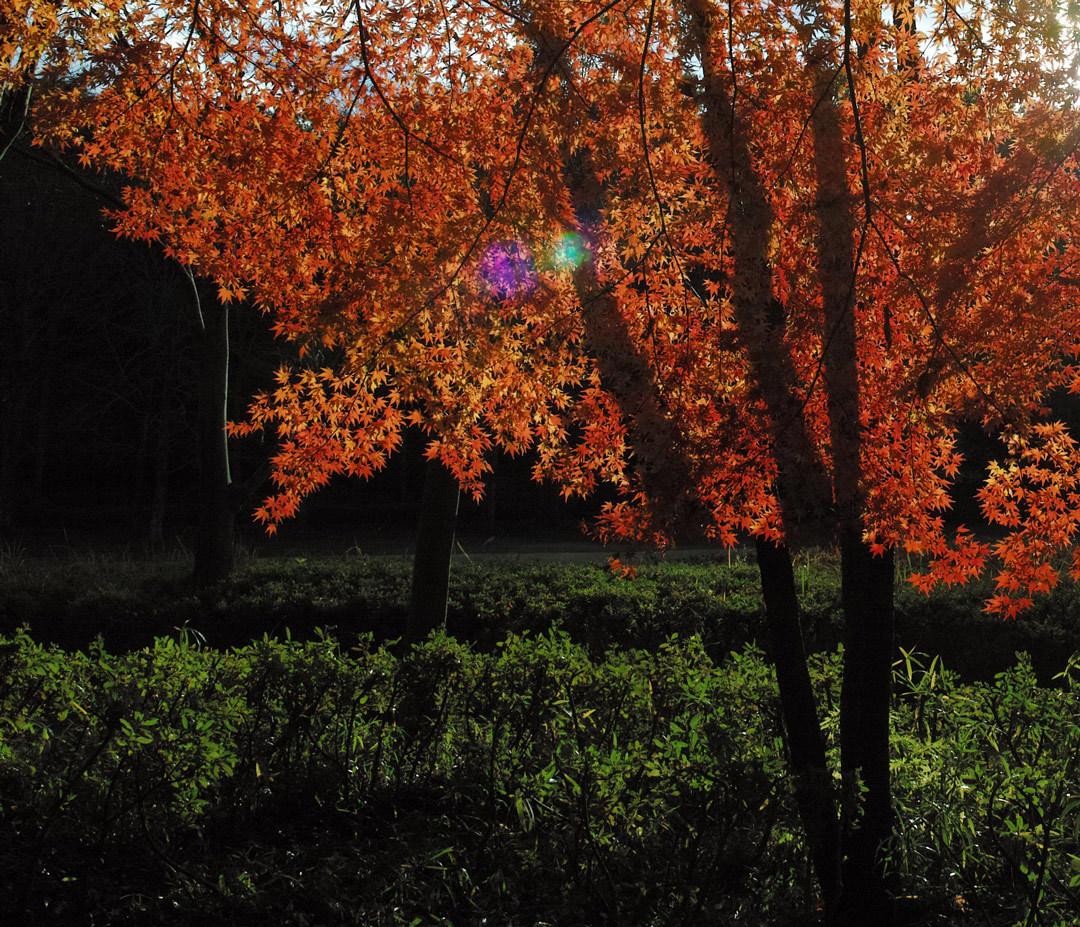 ②21世紀の森と広場、紅葉狩り _c0223825_01505254.jpg