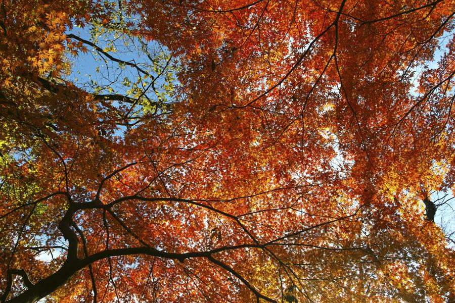②21世紀の森と広場、紅葉狩り _c0223825_01515413.jpg