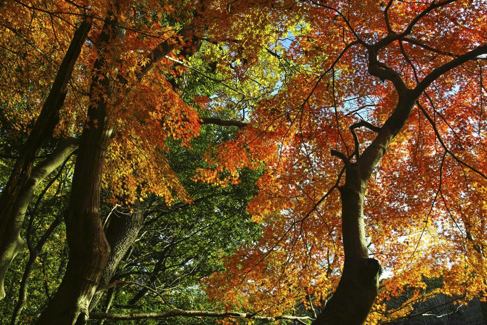 ②21世紀の森と広場、紅葉狩り _c0223825_01525712.jpg