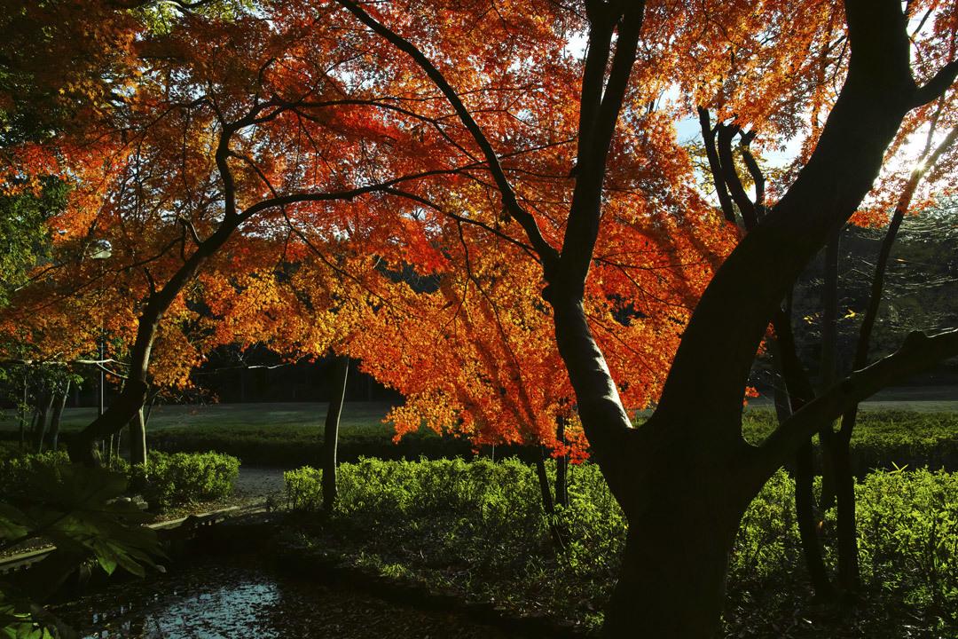 ②21世紀の森と広場、紅葉狩り _c0223825_01535380.jpg