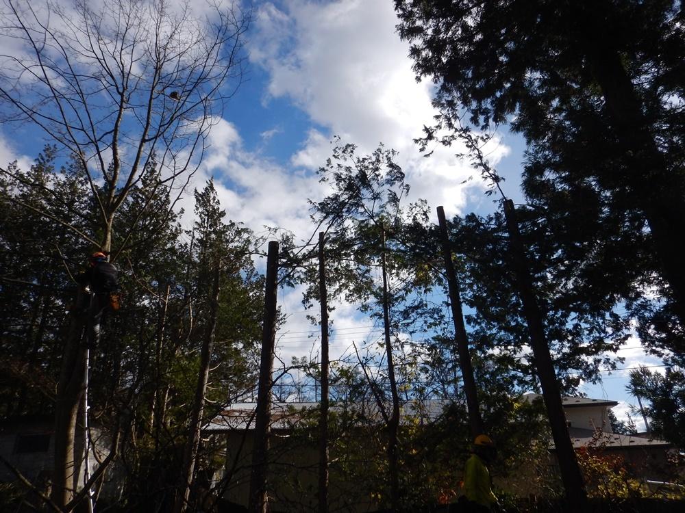 樹木の伐採始まる_c0111229_18420518.jpg