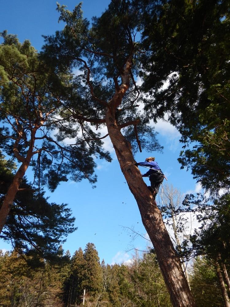 樹木の伐採始まる_c0111229_18421564.jpg