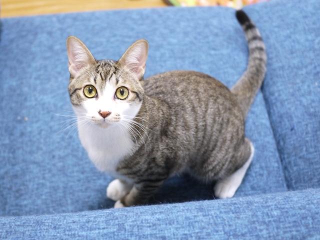 猫のお留守番 しかまるくん編。_a0143140_23475897.jpg