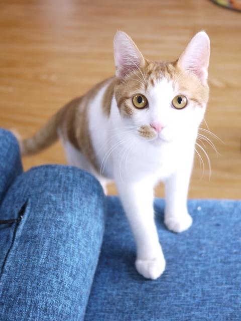 猫のお留守番 しょうたくん編。_a0143140_23532435.jpg