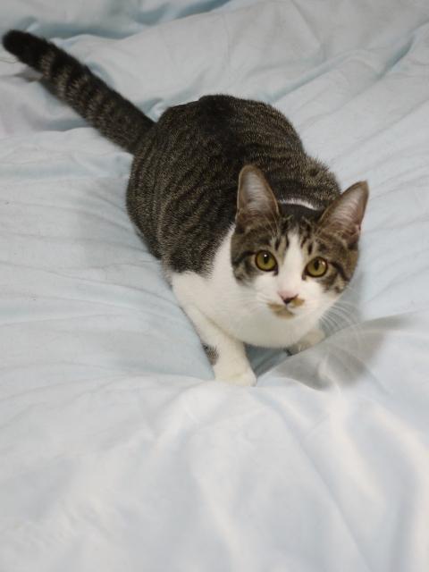 猫のお留守番 みりんちゃん編。_a0143140_23553831.jpg