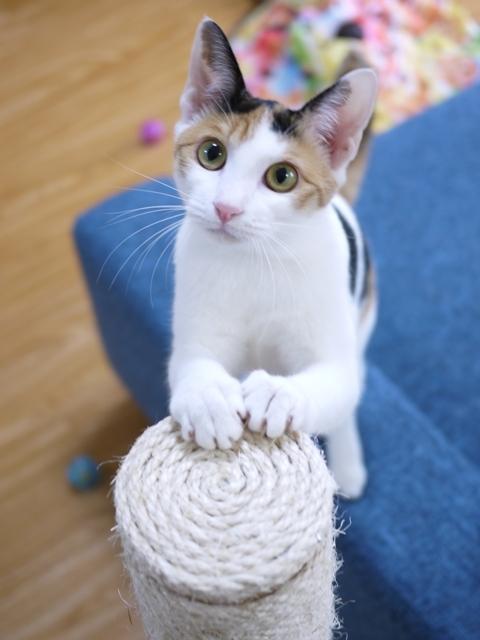 猫のお留守番 りんごちゃん編。_a0143140_23590458.jpg