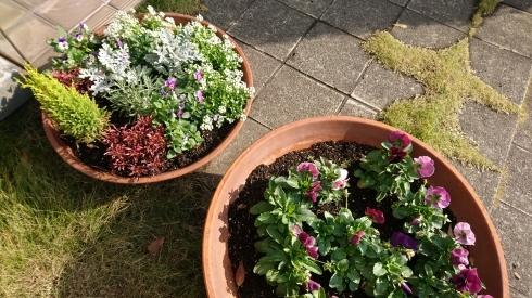 お花の植え替え_f0328051_00581837.jpg