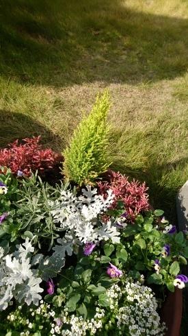 お花の植え替え_f0328051_00583757.jpg