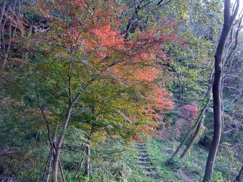 12・3「紅葉の北鎌倉、六国見山と切通しを歩く」_c0014967_9402290.jpg