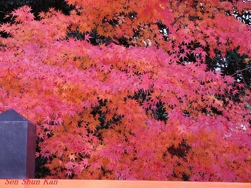 上賀茂神社 名残の紅葉  2017年12月1日_a0164068_16471012.jpg