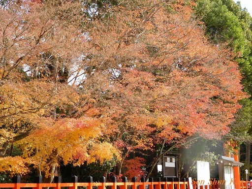 上賀茂神社 名残の紅葉  2017年12月1日_a0164068_16471066.jpg