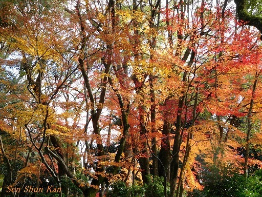 上賀茂神社 名残の紅葉  2017年12月1日_a0164068_16482106.jpg