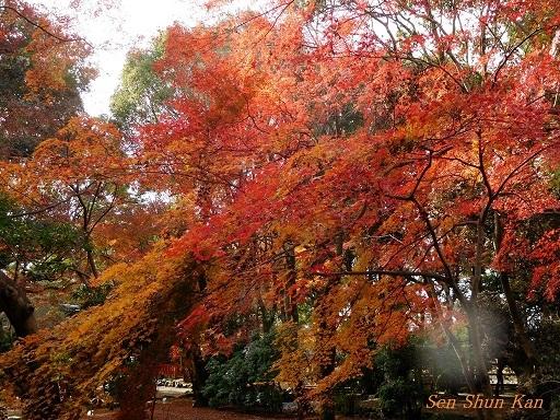 上賀茂神社 名残の紅葉  2017年12月1日_a0164068_16482128.jpg