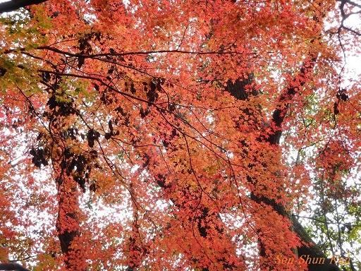 上賀茂神社 名残の紅葉  2017年12月1日_a0164068_16482192.jpg