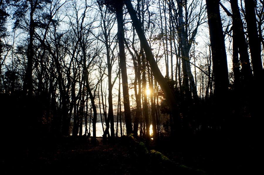 グルーネヴァルト湖_c0180686_14131214.jpg
