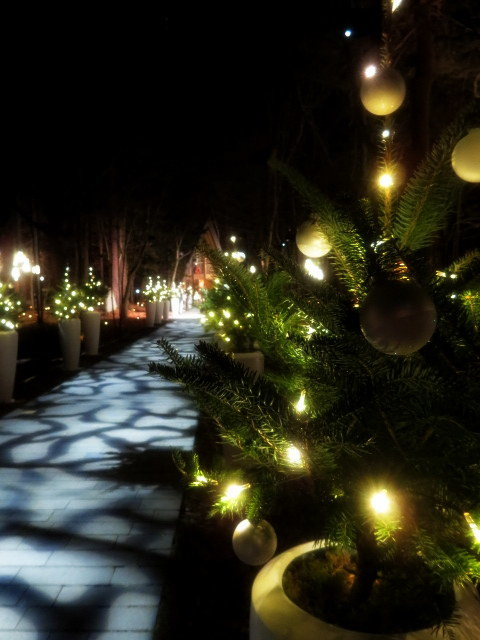 軽井沢高原教会*クリスマスキャンドルナイト・2017~光の十字路_f0236260_00462724.jpg