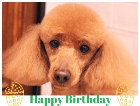 Happy Birthday ♡ ププくん_d0060413_17402631.jpg
