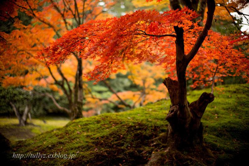 京都錦秋(5)_d0108132_18245515.jpg