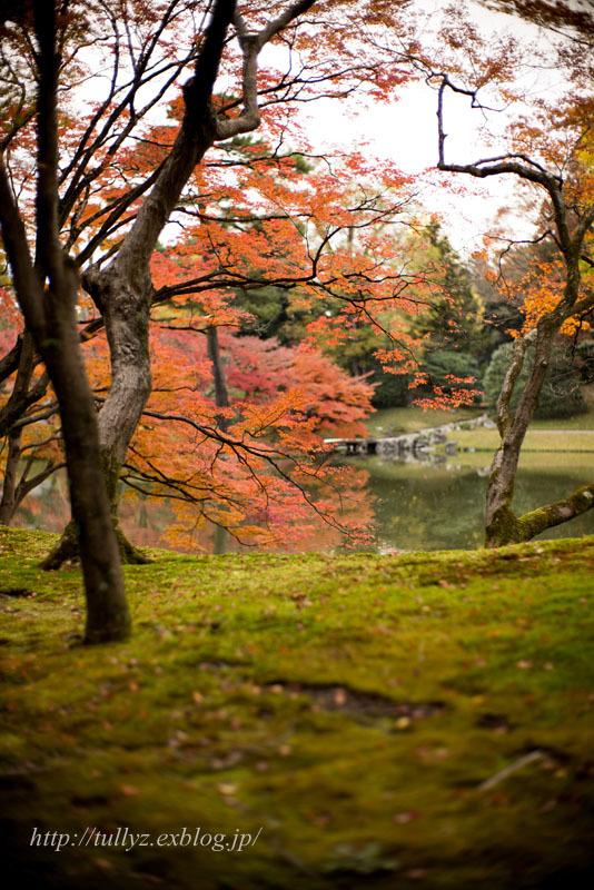 京都錦秋(5)_d0108132_18245937.jpg