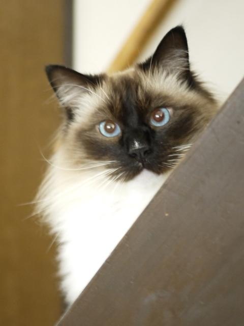 猫のお留守番 レグルスくん編。_a0143140_21421366.jpg