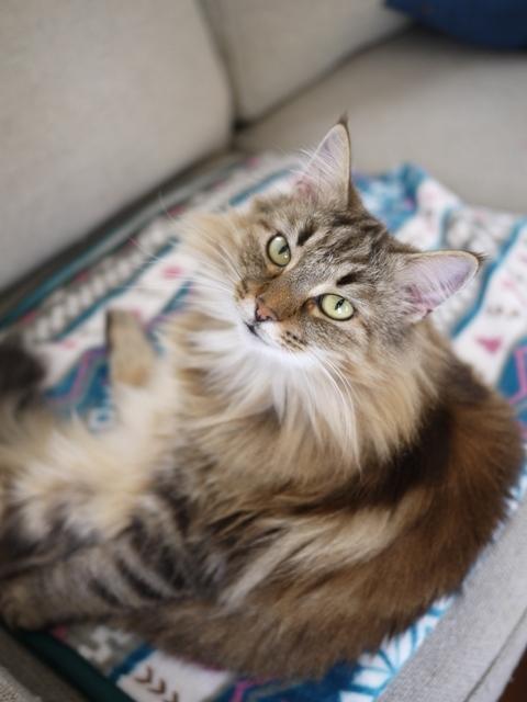 猫のお留守番 ベラトリックスちゃん編。_a0143140_22055774.jpg