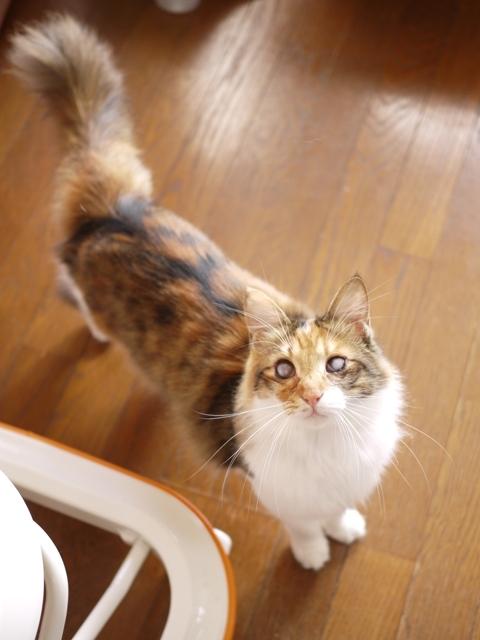 猫のお留守番 コメットちゃん編。_a0143140_22115282.jpg