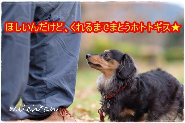 b0115642_16124859.jpg